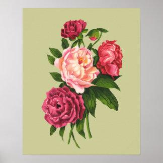 Vintage Rose Pink Peony Garden Flower Poster