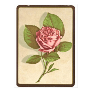 Vintage Rose Print Postcard