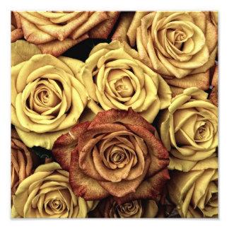 Vintage Roses Photographic Print