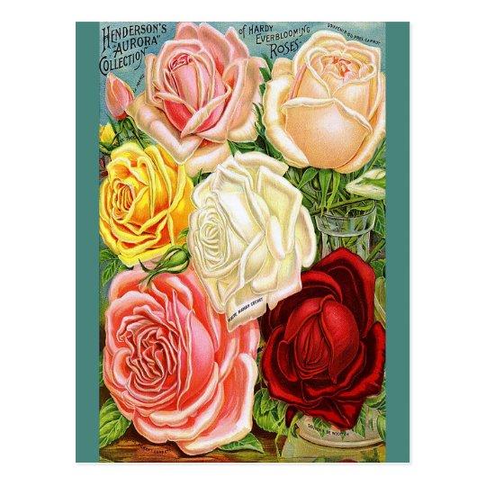 Vintage Roses Postcard
