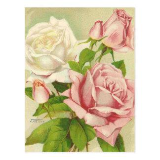 Vintage Roses Postcards