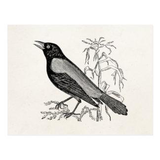 Vintage Rusty Crow Blackbird Bird - Retro Birds Postcard