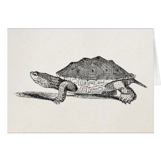 Vintage Salt Water Terrapin Turtle - Template