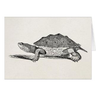 Vintage Salt Water Terrapin Turtle - Template Card