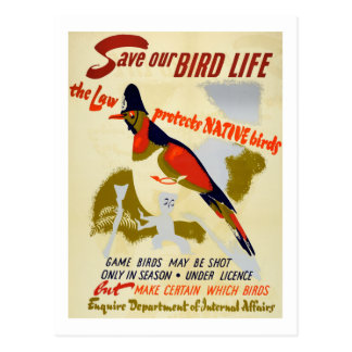 Vintage Save Native Wild Bird Life Postcard