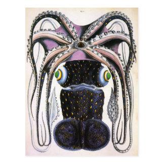 Vintage Science Biology, Giant Octopus or Squid Postcard