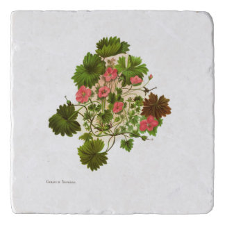 Vintage Science NZ Flowers - Geranium traversii Trivet