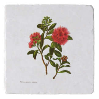 Vintage Science NZ Flowers - Meterosideros florida Trivet