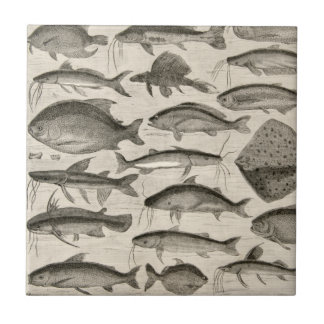 Vintage Scientific Fish Swimming Amazon River Fins Small Square Tile
