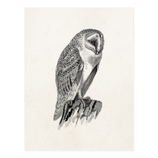 Vintage Screech Owl Bird Illustration Template Postcard