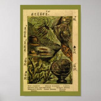 Vintage Sea Anemone Sea Creatures Art Print