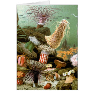 Vintage Sea Anemones. Marine life Animals Greeting Card