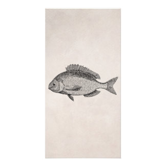 Vintage Sea Bream Fish Retro Fishes Parchment Customised Photo Card