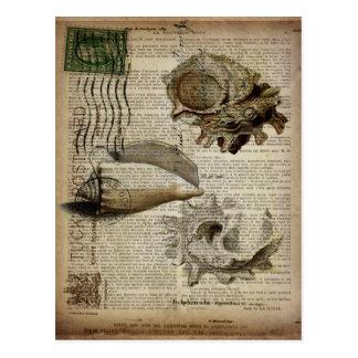 vintage sea shells ocean sea beach decor postcard