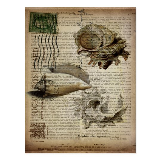 Vintage sea shells ocean sea beach decor postcard zazzle for Vintage ocean decor