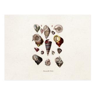 Vintage Sea Shells Personalised Retro Auger Shell Postcard