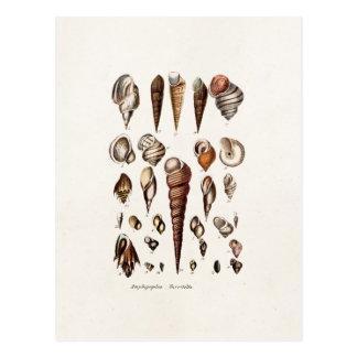 Vintage Sea Shells Personalized Retro Auger Shell Postcard