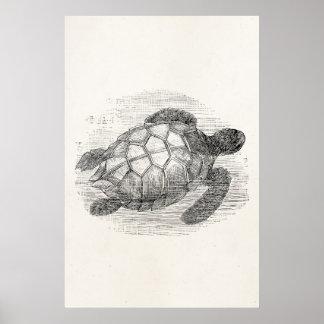 Vintage Sea Turtle Personalized Marine Turtles Poster