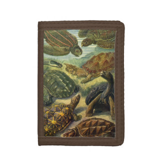 Vintage Sea Turtles and Tortoises by Ernst Haeckel Trifold Wallet
