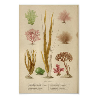 Vintage Sea Weeds Red Green Art Print