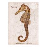 Vintage Seahorse - Antique Seahorses Customised