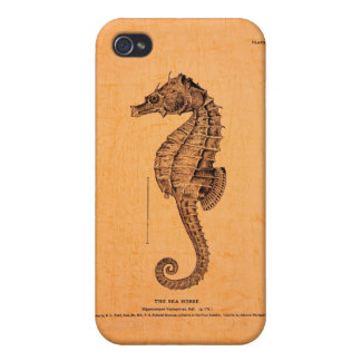 Vintage Seahorse Illustration iPhone 4 Cases