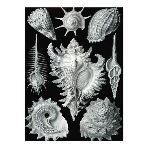 Vintage Seashell Print Custom Invites
