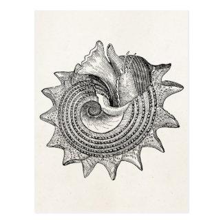 Vintage Seashells Antique Shell Parchment Template Postcard