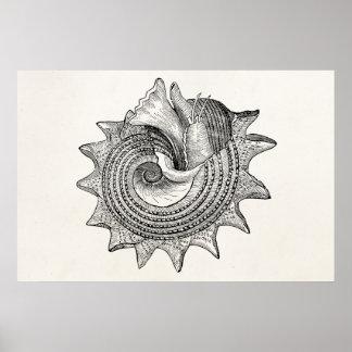 Vintage Seashells Antique Shell Parchment Template Poster
