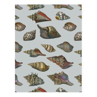 Vintage Seashells Postcard