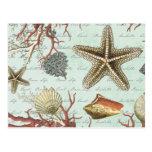 Vintage Seashells...postcard