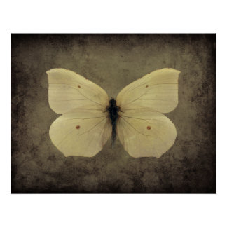 Vintage sepia butterfly poster
