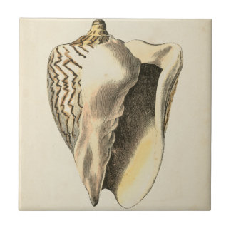 Vintage Sepia Conch Shell Ceramic Tile