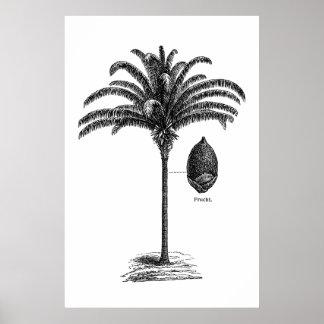 Vintage Sepia Retro Brazilian Palm Tree Template Poster