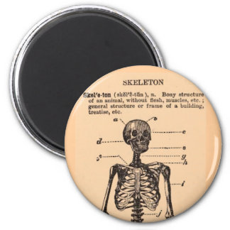 Vintage Skeleton Definition Magnet