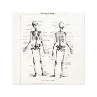 Vintage Skeleton Human Anatomy Bone Bones Skull Canvas Print