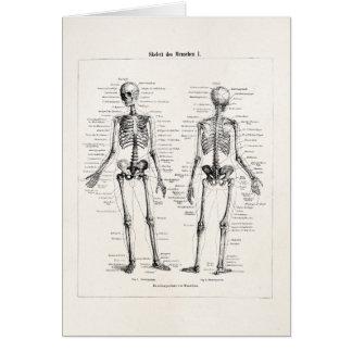 Vintage Skeleton Human Anatomy Bone Bones Skull Card