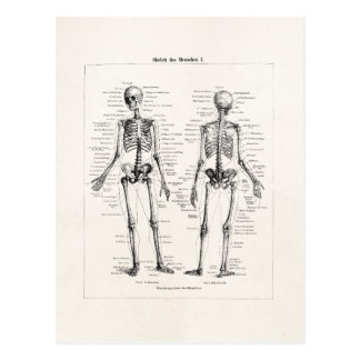 Vintage Skeleton Human Anatomy Bone Bones Skull Postcard