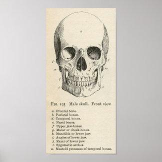 Vintage Skull Anatomy Halloween Poster