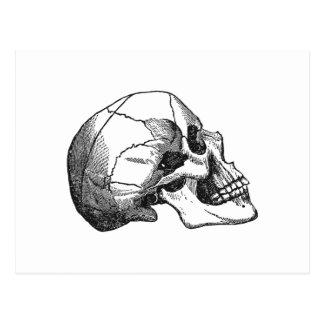 Vintage Skull Profile Illustration Postcard