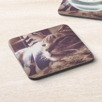 Vintage Sleepy Cat Photo | Coaster