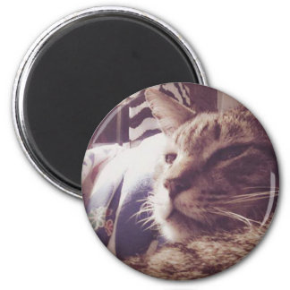 Vintage Sleepy Cat Photo | Magnet
