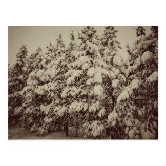 Vintage Snowscape, Conifer, CO Postcard