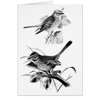 Vintage Sparrows (Blank Inside), Card