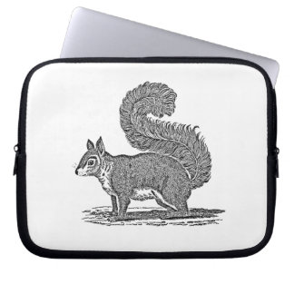 Vintage Squirrel Illustration - 1800's Squirrels Laptop Sleeves