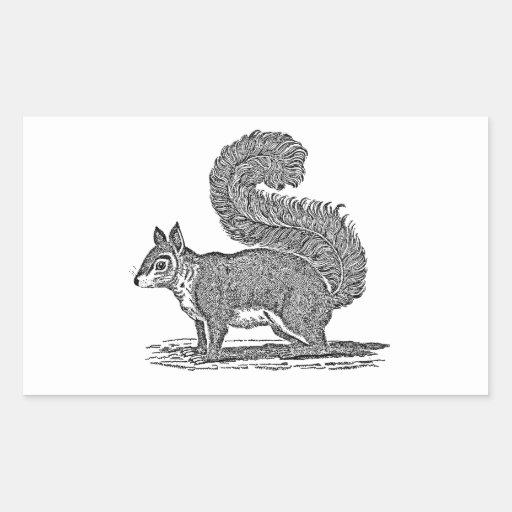 Vintage Squirrel Illustration -1800's Squirrels Rectangular Sticker