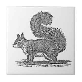 Vintage Squirrel Illustration - 1800's Squirrels Tile