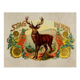 Vintage Stag Horn Postcard