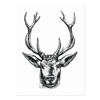 Vintage Stag or Deer Head with Antlers Postcard