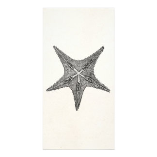 Vintage Starfish Antique Star Fish Template